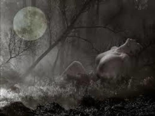 La lune se repose sur un lit de coton blanc   CORRIGÉ