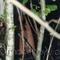 un jeune faune nu en ballade au fond des bois
