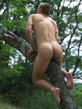 Sur un arbre perché ...